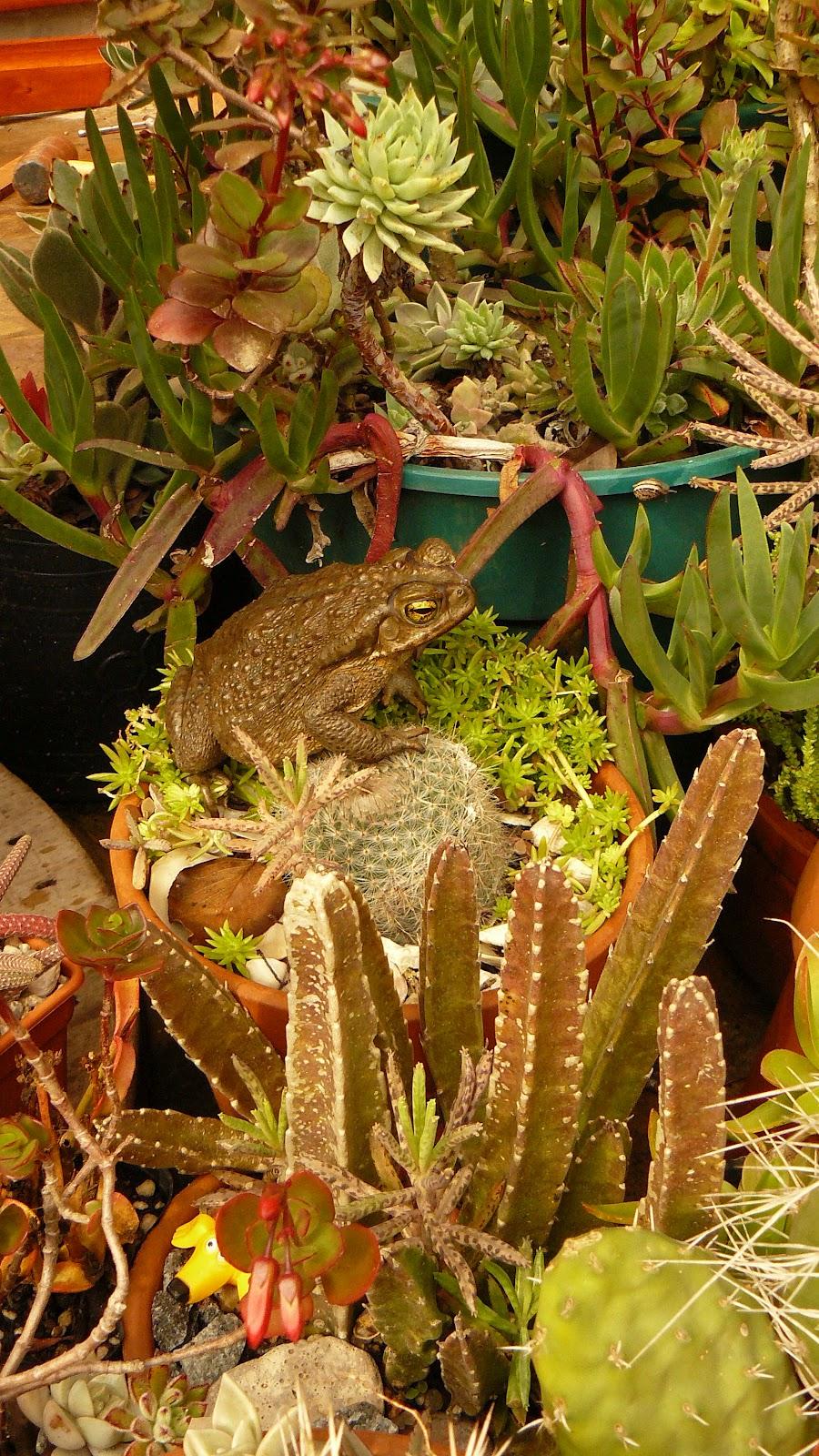 Jardines de cactus y suculentas agosto - Jardines de cactus y suculentas ...