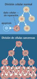 Cura contra en cancer una realidad oculta al mundo