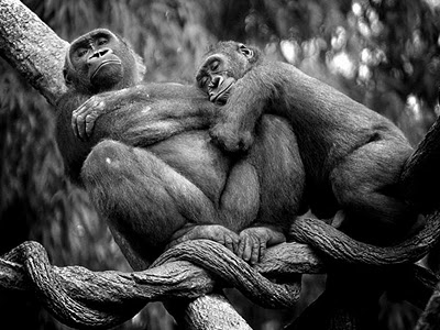 Funny Monkey Couple
