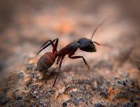 Kisah Nabi Sulaiman dan Seekor Semut
