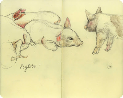 Piglets, sketchbook at the Royal Fair 2012 by Shannon Reynolds