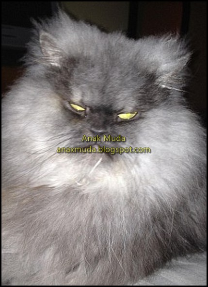 http://asalasah.blogspot.com/2012/10/foto-kucing-paling-jutek-sedunia.html