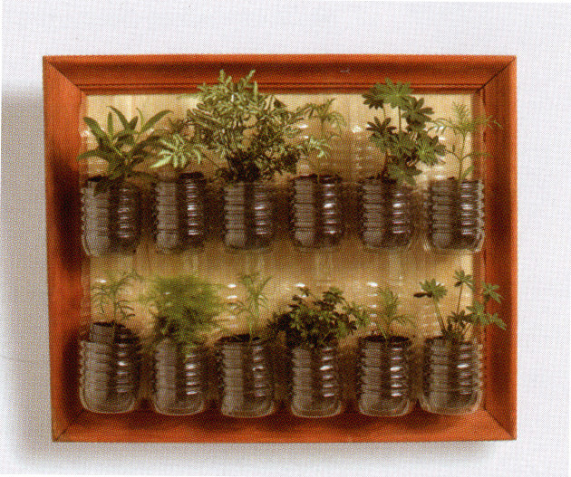 mini jardim de temperos:Plastic Bottle Herb Garden