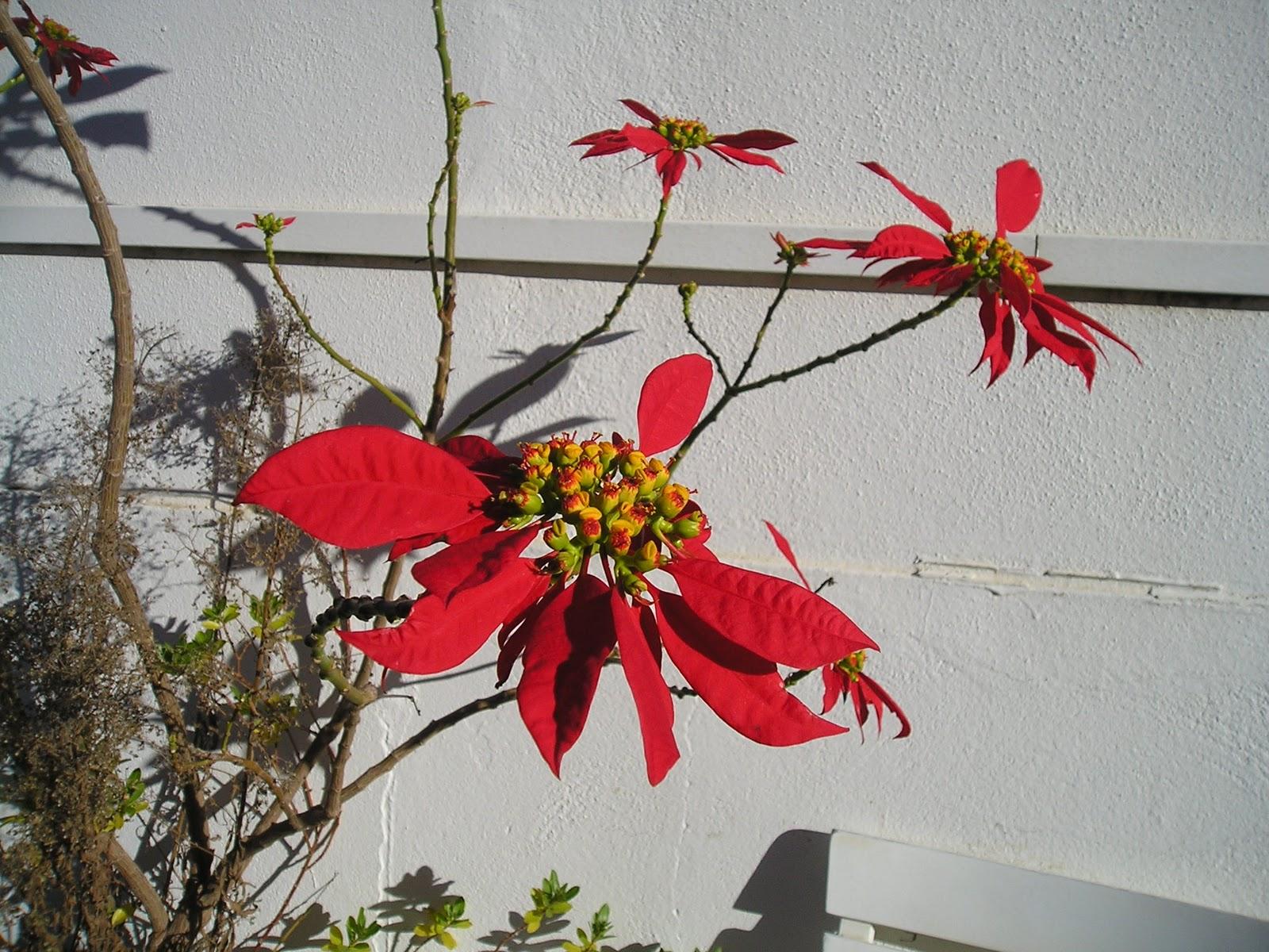 39 blog sur le portugal to discover portugal 39 for Fleurs et cadeaux