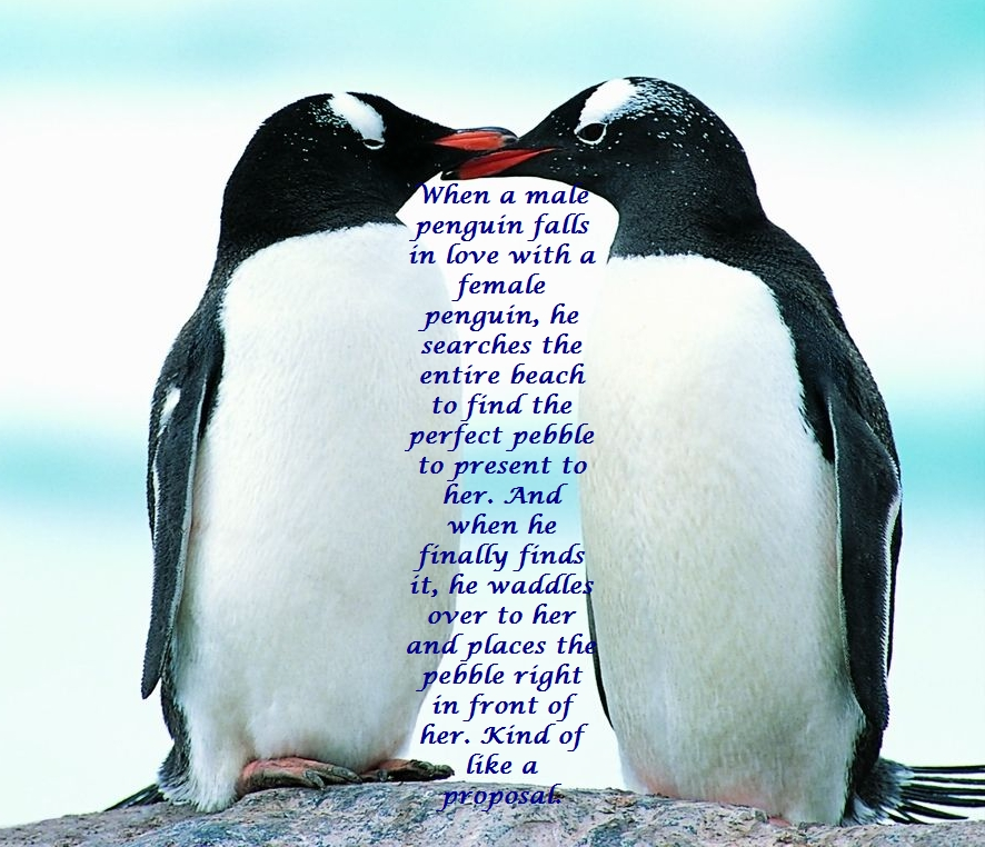 I Love You Penguin Quotes Stunning Penguin Love Quotes