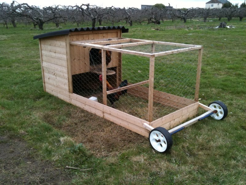 The chicken daily moveable chicken house for How to build a movable chicken coop