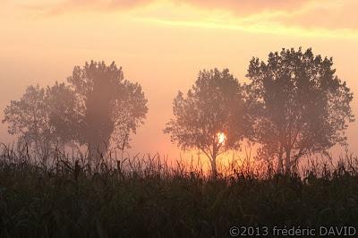 silhouette arbre contre-jour aube rose soleil brume campagne mais champ Seine-et-Marne