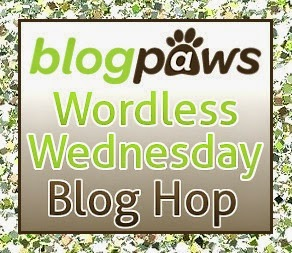 http://blogpaws.com/executive-blog/pet-parenting-health-lifestyle/wordless-wednesday/blogpaws-wordless-wednesday-20s-time/