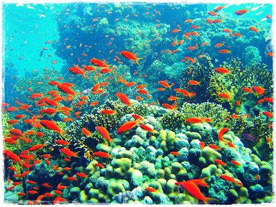 Uniknya Ekosistem Terumbu Karang ~ Bang-Faster™ Free Download Any ...