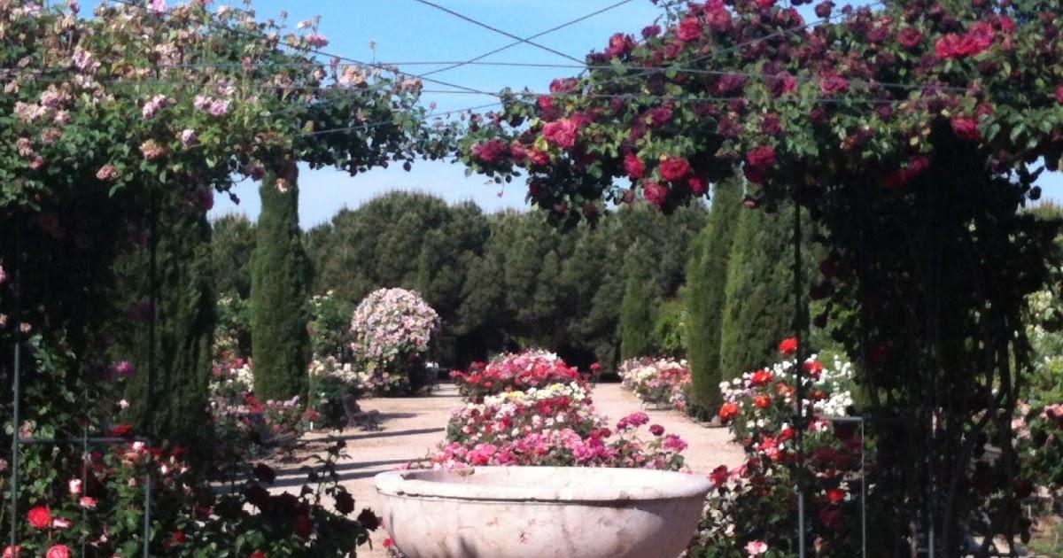 Rosaleda del Real Jardín Botánico Juan Carlos I  Jardín ...