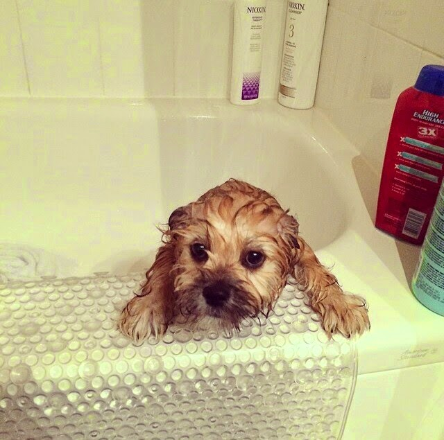 Cute dogs - part 26 (50 pics), adorable dogs, cute dog pictures