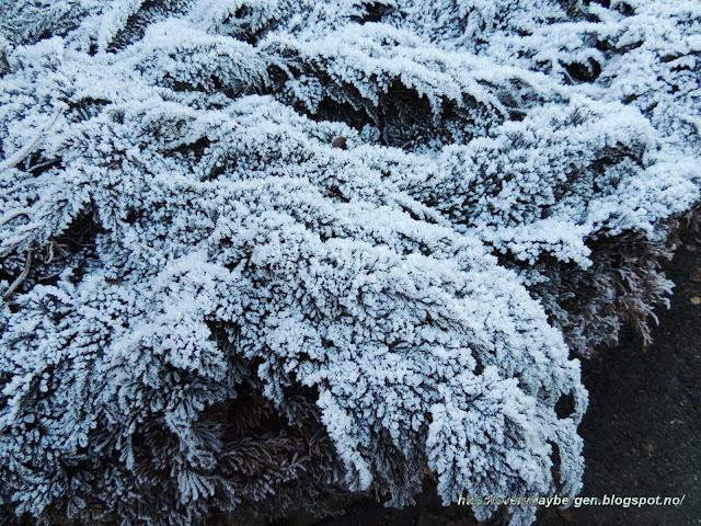 Bergen frost