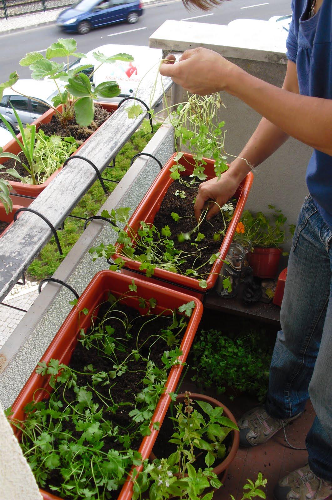 Ideias De Hortas ~ Horticultura Sustentável HORTA NA VARANDA