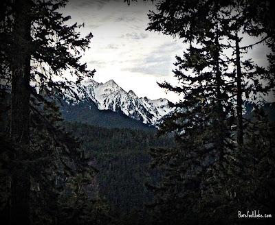 elwha trail view