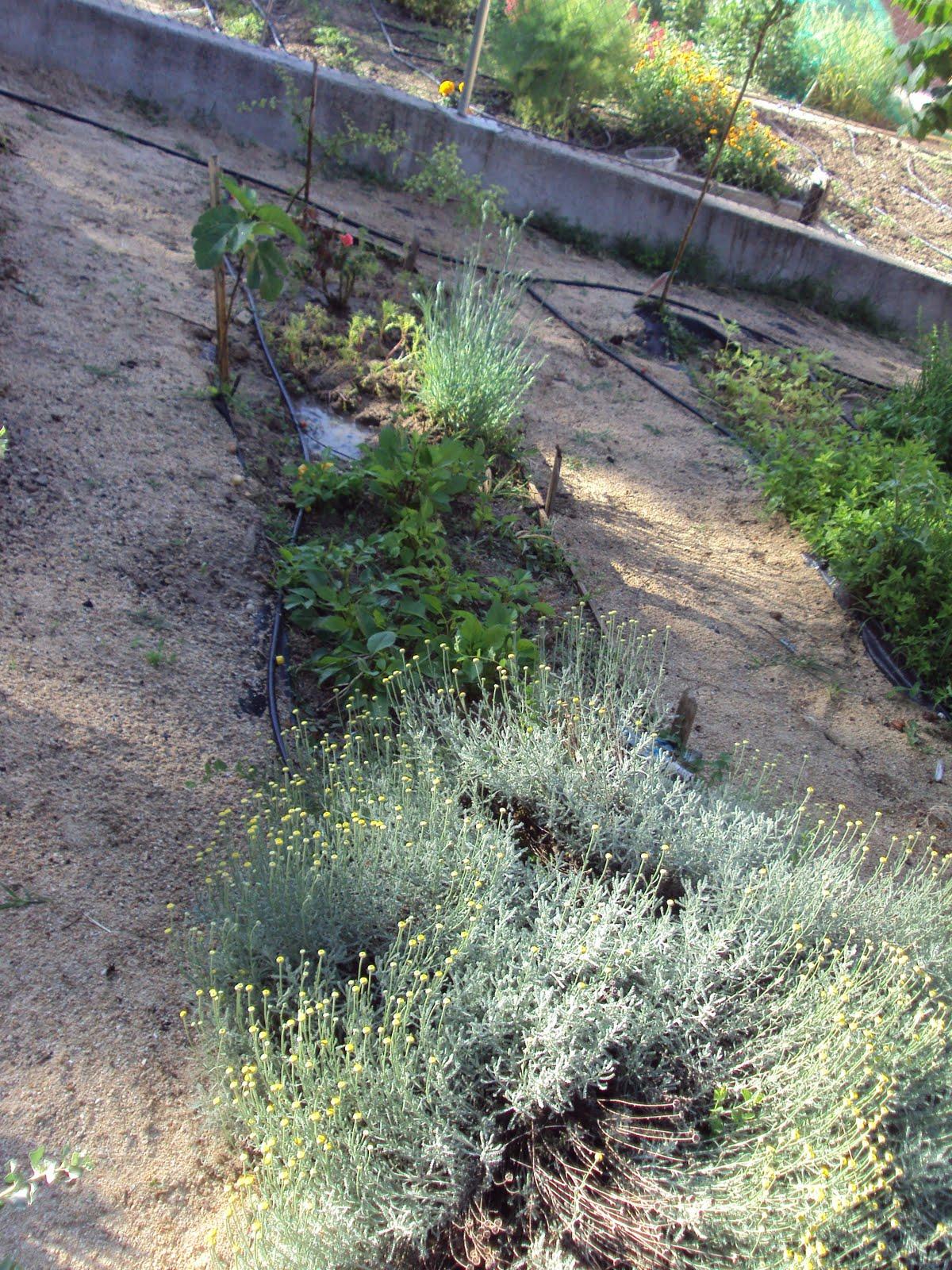 En torno al huerto las plantas en el terreno - Plantas de huerto ...