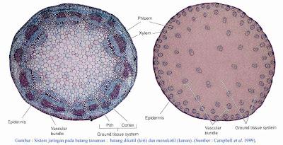 jaringan parenkim, sklerenkim, epidermis, pengangkut, pengyokong dan lain-lain