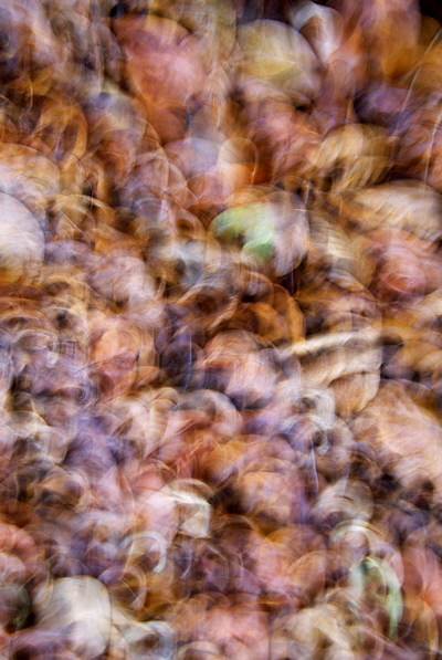 Abstract image of autumn leaves in the forest