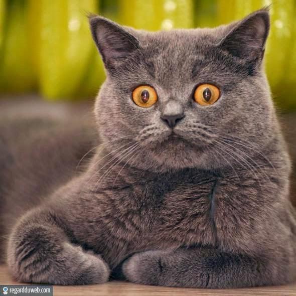 photos droles et tonnantes animal chat v127 des milliers de photos dr les et insolites. Black Bedroom Furniture Sets. Home Design Ideas