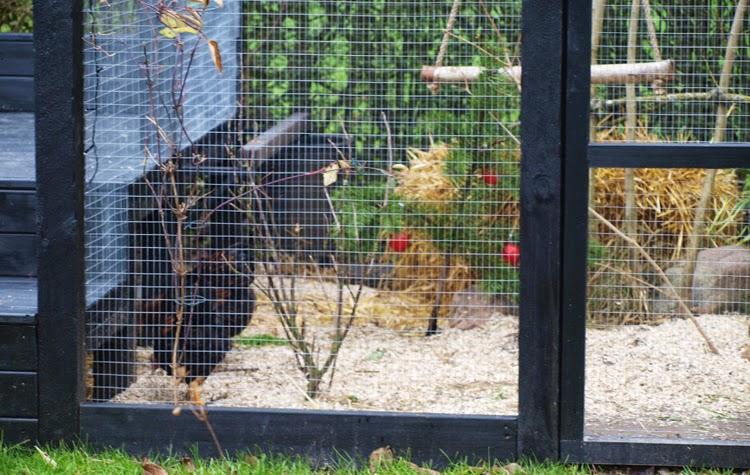 En julepyntet hønsegård