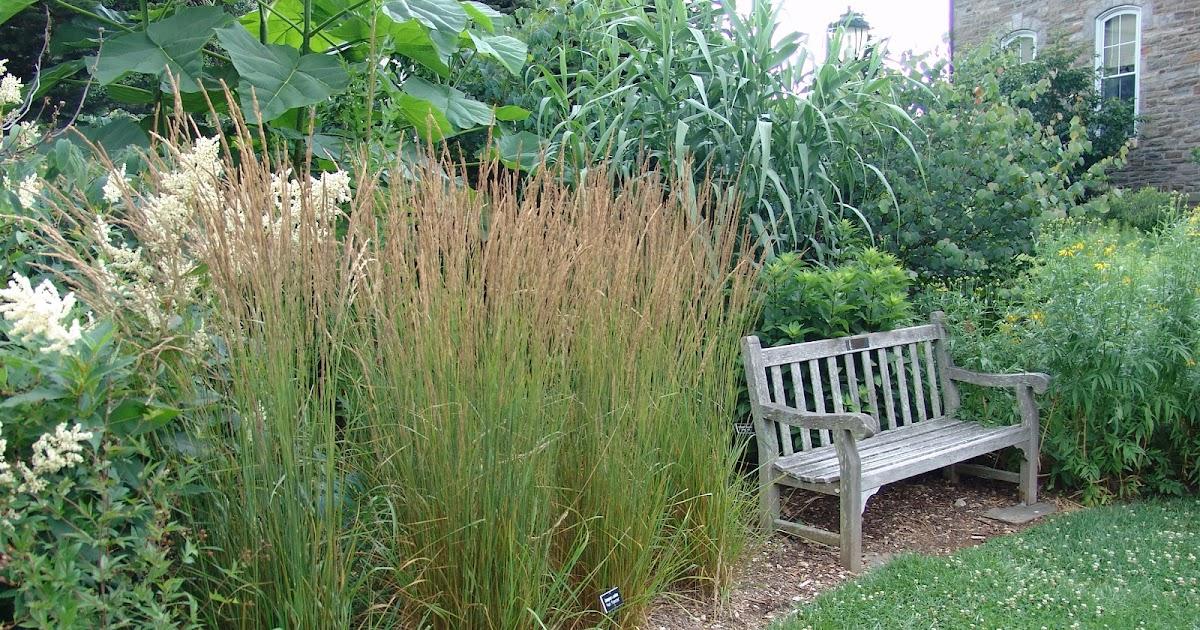 Dream of designs ornamental grasses for Ornamental grasses design plans