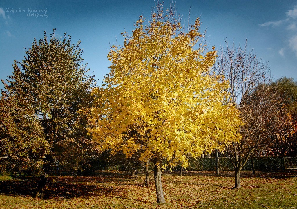 Napiętnowanie jesieni