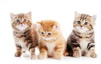 http://cats.lovetoknow.com/Taking_Care_of_Kittens