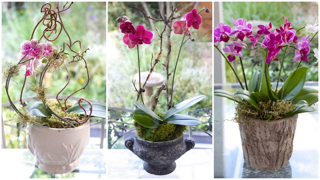 Three Orchid Projects; How to Design and Style and Orchid like a Pro; Nora's Nest