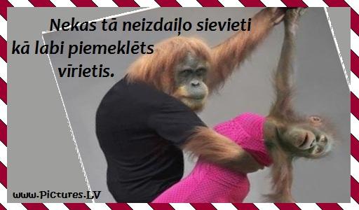 pērtiķi dejo