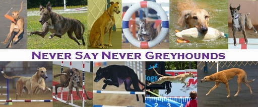 Never Say Never Greyhound