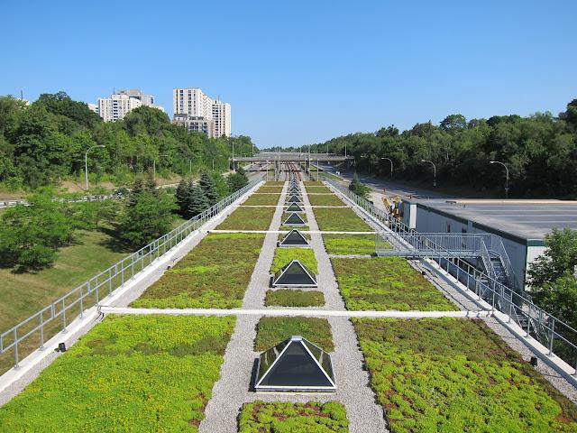 Eglinton West's green roof