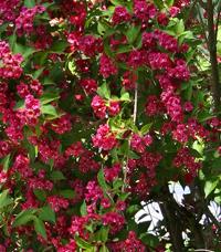 Maison la campagne jardin malin for Www jardiner malin fr