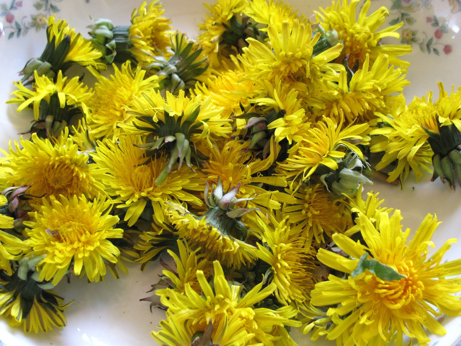 Eating Dandelion Flowers Dandelion Flower Tea Recipe