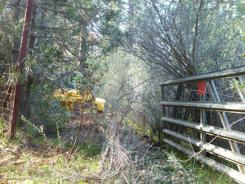 Triple Creek Restoration Clearing Brush Part 1