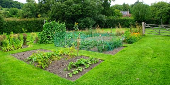 Vegetable Garden Plans for Beginners AyanaHouse