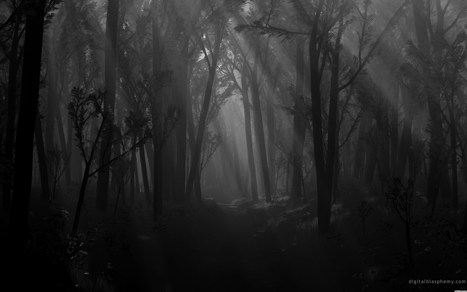 dark places forest trees - photo #23