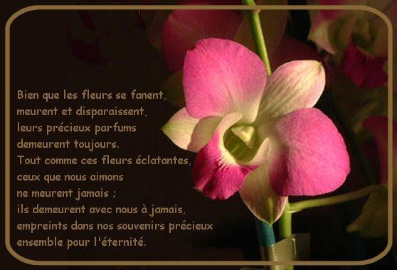 La mort : Pour en chasser la peur, il faut en parler... - Page 2 Deces-fleur