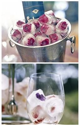 isbitar med rosor, rosenchamoange