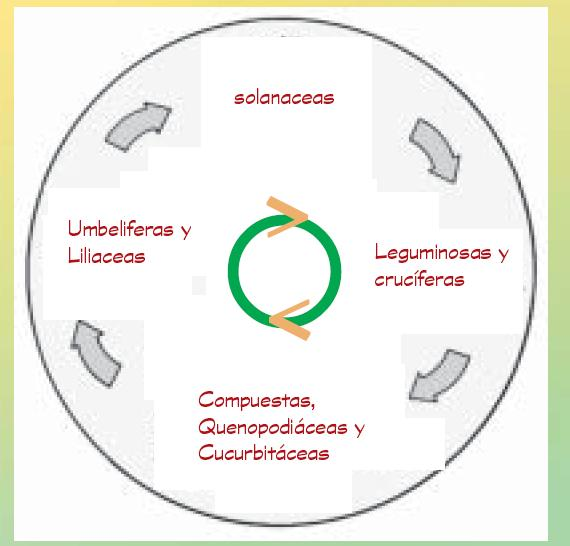 Huerto urbano huerto urbano rotaci n y asociaci n de for Asociacion de hortalizas