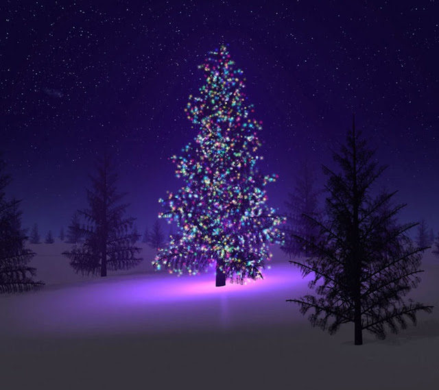 Christmas trees snow awesome wallpaper