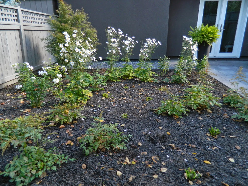 the danforth new garden design after autumn by Paul Jung Gardening Services Toronto