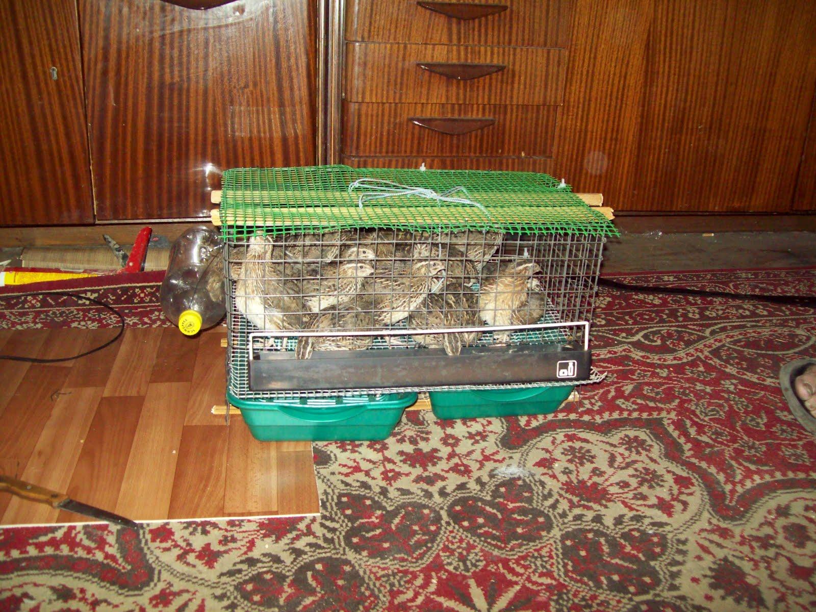Как сделали мишку фредди 635