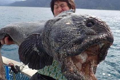 Nelayan Jepang Tangkap Monster Laut yang Menakutkan