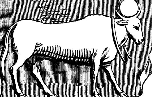 the striding apis bull essay The bull calf in the poem the bull calf the stanzas go from good to bad the striding apis bull essay - the striding apis bull the apis bull originated in.