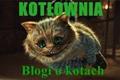 Blogi o kotach