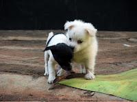 Mukanzubo puppies!
