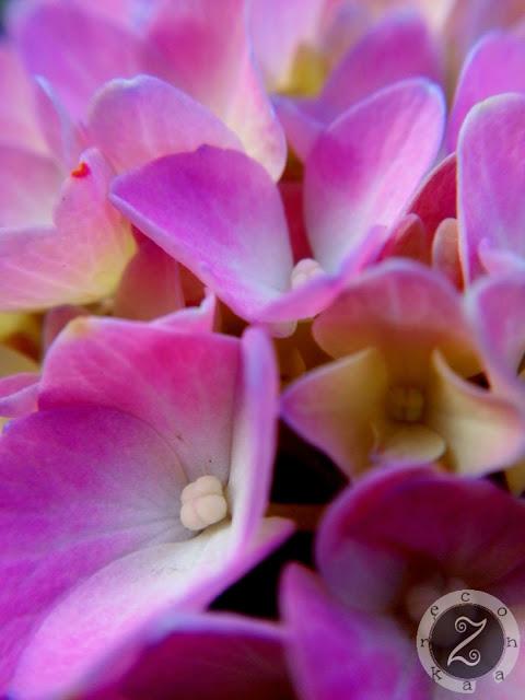zdjecia kwiatów roślin