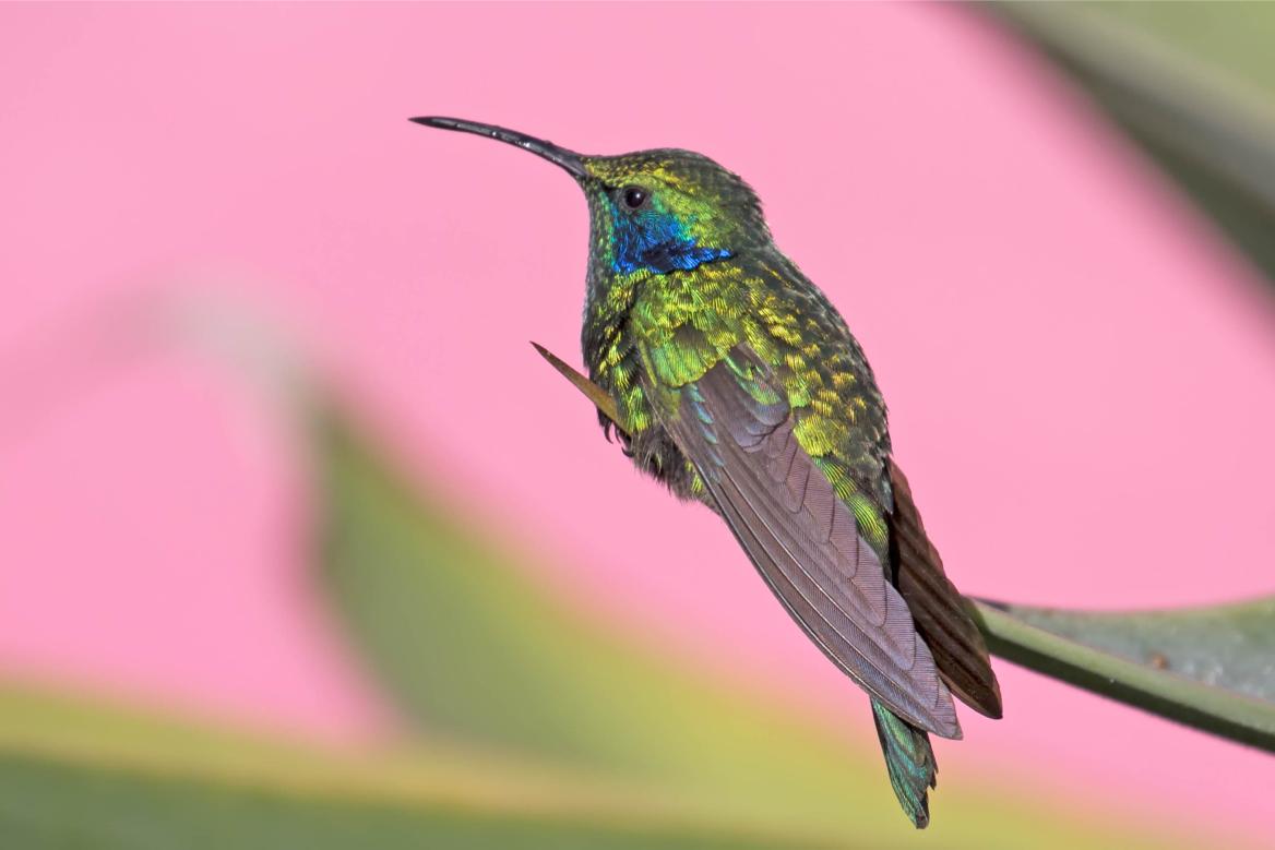 ハチドリの館(Hummingbird)
