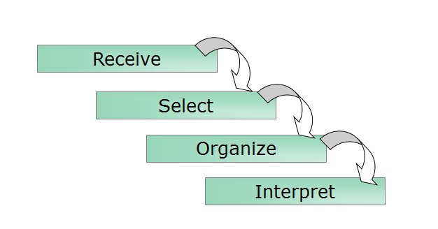 the selective perception process Selective perception, selective exposure (senses are activated by sound, smell, noise, or touch) stages of the perception process - stage two: organization (6) sss & ric cultural, situation, self-schemata, state, interpersonal, and relational schemata.