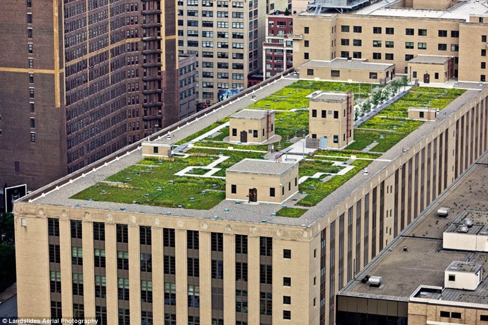 Big apple secrets the morgan general mail geen roof and for Green roof cost per square foot