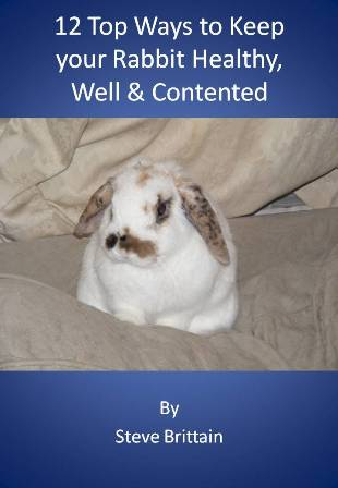 12 top ways to keep your rabbit healthy, well & contented